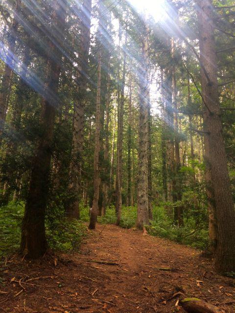 5A手前の柔らかくふかふかのトレイルを走る。静かで居心地も格別。