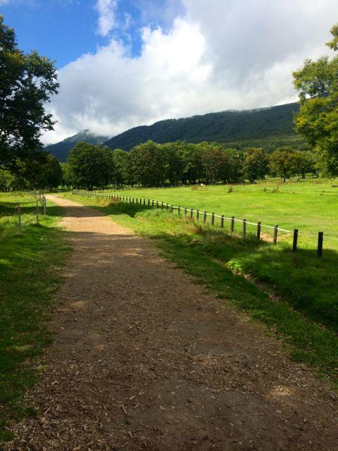 草を頬張る牛と高原の景色を堪能しながら牧草地をかろうじて走り抜ける。